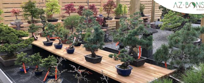AZ bonsaï, un magasin de référence dans le domaine du bonsaï vient d'ouvrir en Alsace