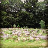 Labyrinthe des animaux
